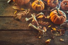Halloween horror background with bones. And dried leaves scattered between fresh pumpkins on old rutsic wooden boards with copy space Royalty Free Stock Photography