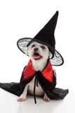 Halloween-Hund Lizenzfreie Stockfotos