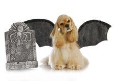 Halloween-Hund lizenzfreies stockfoto