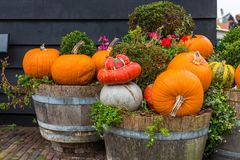halloween illustrationpumpor ställde in vektorn Fotografering för Bildbyråer