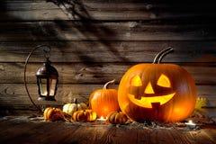 halloween ilustracyjne dynie zestaw wektora