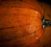 halloween ilustracyjne dynie zestaw wektora Zdjęcie Stock
