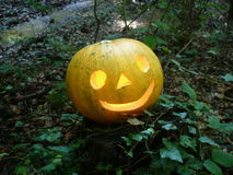 Halloween im Wald Stockfotos