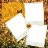 halloween indigochyld papieru zasoby Fotografia Royalty Free