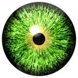 Halloween isolated on white green eye. Eyeball texture with black pupil stock photo