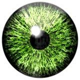 Halloween isolated on white green eye vector illustration