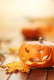Halloween jack o' lantern Royalty Free Stock Images