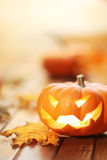 Halloween jack o' lantern background Royalty Free Stock Image
