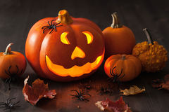 Halloween Jack O Lantern pumpkin spiders leaves Stock Photography