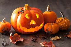 Halloween Jack O Lantern pumpkin spiders leaves Royalty Free Stock Photo
