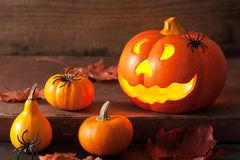 Halloween Jack O Lantern pumpkin spiders leaves Stock Images