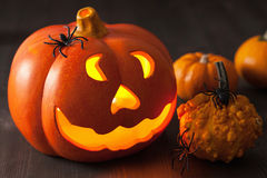 Halloween Jack O Lantern pumpkin spiders Stock Image
