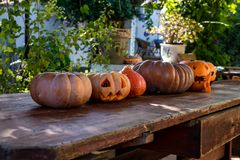 Jack o lantern pumpkins for Halloween. Halloween jack o lantern pumpkins sitting in a row on a table in a garden setting royalty free stock photo