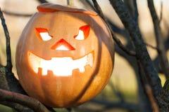 Halloween jack-o-lantern on tree Royalty Free Stock Photos