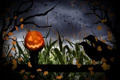 Halloween-Jack-O-Laterne und -krähen Stockfotos