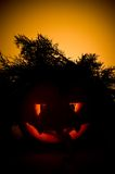 Halloween-Kürbis. Lizenzfreie Stockfotos
