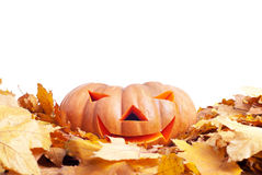 Halloween-Kürbis auf dem Herbstlaub lokalisiert auf weißem Hintergrund Stockfotos