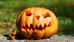 Halloween Kürbis, der im Garten steht Fallende Blätter lizenzfreie abbildung