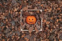 Halloween Kürbis im Kasten Herbst und gefallene Blätter Nette Kürbis- und Eichenblätter lizenzfreie stockfotografie