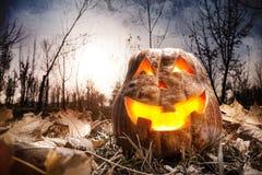 Halloween-Kürbis im Wald Stockbild