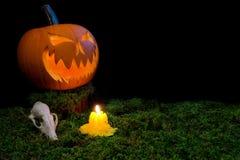 Halloween-Kürbis, Tierschädel und Kerzen, die in die Dunkelheit glühen Stockfoto