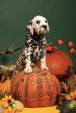 Halloween-Kürbis- und Dalmatinerwelpe Lizenzfreie Stockbilder