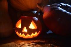 Halloween-Kürbis unter Mondschein stockbilder