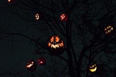 Halloween-Kürbis-Wald stockfoto