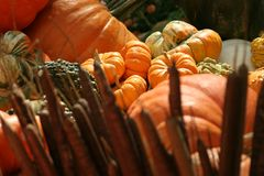 Halloween-Kürbise Stockbild