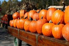 Halloween-Kürbise Lizenzfreies Stockfoto