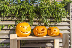 Halloween-Kürbise, die im Garten schnitzen Lizenzfreies Stockfoto