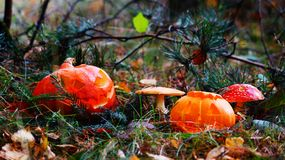 Halloween-Kürbise im Park Lizenzfreie Stockfotos