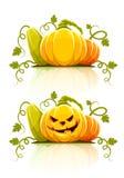 Halloween-Kürbisgemüse mit grünen Blättern Lizenzfreies Stockfoto