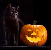 Halloween-Kürbiskopf und schwarze Katze Stockfotos