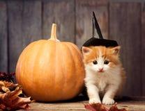 Halloween-Kürbissteckfassung-olaterne und Ingwerkätzchen auf schwarzem Holz Stockbilder