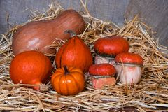 Halloween-Kürbiszusammensetzung im Stroh stockbilder