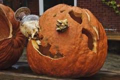 Halloween-Kater stockbild