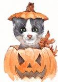 Halloween-Katze im Kürbis Lizenzfreie Stockfotos