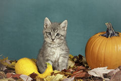 Halloween kitten. Royalty Free Stock Images