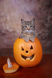 Halloween Kitten. Tabby Kitten sitting in Halloween Jack-O-Latern stock photo