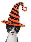 Halloween kitten royalty free stock photo
