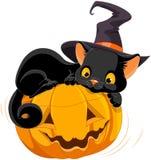 Halloween Kitten. Illustration of Halloween kitten are lying happily on a pumpkin vector illustration