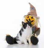 Halloween kitten sitting Stock Image