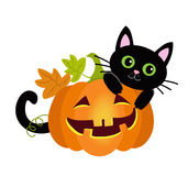 Halloween kitty cat and funny pumpkins. Vector illustration. Royalty Free Stock Photos