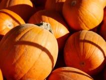 Halloween kommt! Stockbild