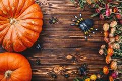 Halloween-Konzept mit neuen Kürbisen, Spinnen und Wanzen mit Blumen Süßes sonst gibt's Saures Ansicht von oben Lizenzfreie Stockbilder