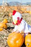 Halloween-Kostüme Stockfotografie