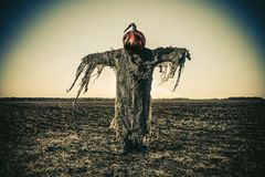 Scarecrow on halloween. Halloween legend. Portrait of Jack-lantern with a pumpkin on his head standing in the field as a scarecrow Royalty Free Stock Photo