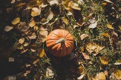 halloween liten pumpa som ligger i parkera på höstsidor som är utomhus- Royaltyfria Foton