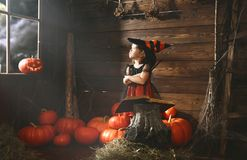 Halloween.  little witch   conjures with  book of spells,  magi Royalty Free Stock Photography